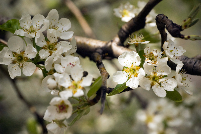 Flowering tree photo really not worth archiving a tree branch with small white flowers mightylinksfo Image collections